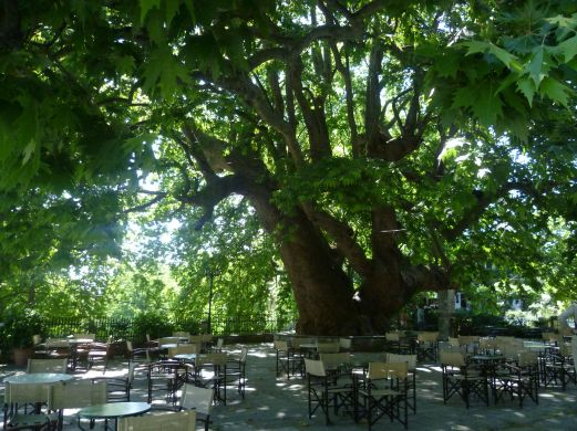 The giant plane tree in Aghia Paraskevi Sq, Tsangarada